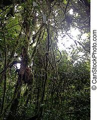 Monteverde Rain Forest Costa Rica.