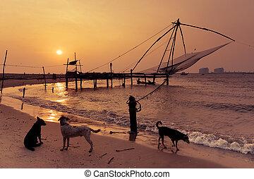 costa, tropical, océano de puesta de sol, playa, perros