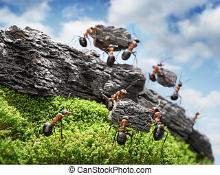costructing, groot, concept, muur, mieren, teamwork, team