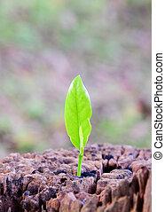 costruzione, vita, concetto, centro, piantina, ), sostegno, albero, future.., (focus, tronco, crescente, nuovo, forte