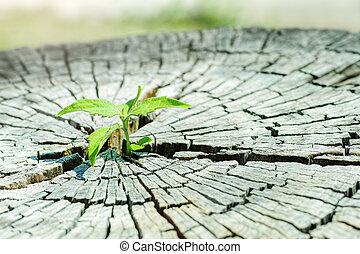 costruzione, vita, concetto, centro, piantina, sostegno, albero, future..focus, tronco, crescente, nuovo, forte