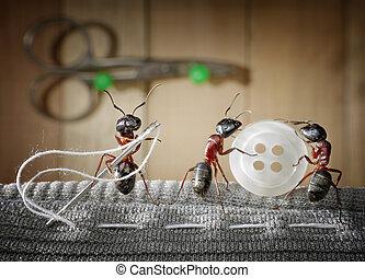 costura, hormigas, hormiga, sastre, uso, equipo