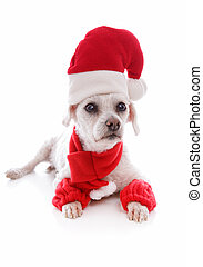 Cosy dog wearing a santa hat