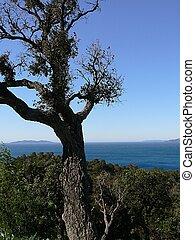 tree and sky blue