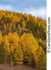 coteau, automne, jour ensoleillé
