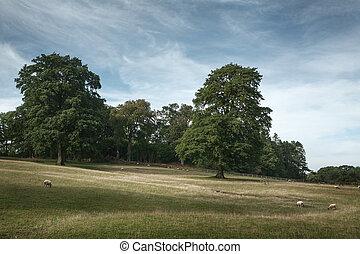 cotswold, vista, campo de inglaterra, pintoresco
