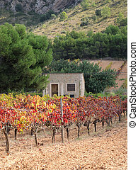 Cottage in a Vineyard
