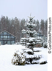 Cottages with fir tree at winter