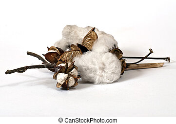 Cotton on the twigs on a white background