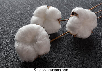 cotton balls on a black background