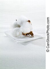 Cotton boll - Close-up of Ripe cotton boll on cotton textile...