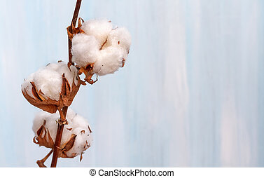 Cotton buds branch.