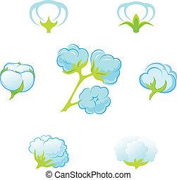 Cotton (Gossypium).