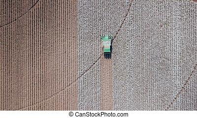 Cotton Field. Cotton harvest by agriculture combine. Cotton Plant.
