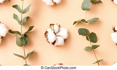 cotton flowers and eucalyptus on beige background - nature, ...