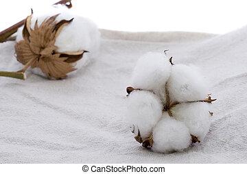 Cotton plant on Cotton fabric Texture