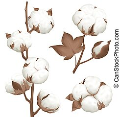 Cotton Plant Boll Realistic Set - Ripe cotton boll opened...