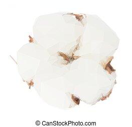 Cotton plant bud