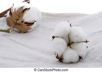 Cotton plant on Cotton fabric Texture