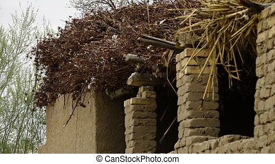 Cotton plants on top of a cottage - A Medium still shot of a...