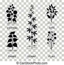 Cotton, ramie, kenaf, jude and flax plants with leaves, pods and flowers. Silhouette icons with reflection on transparent background