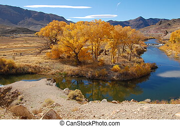 cottonwoods in nevada - cottonwoods and stream in nevada...