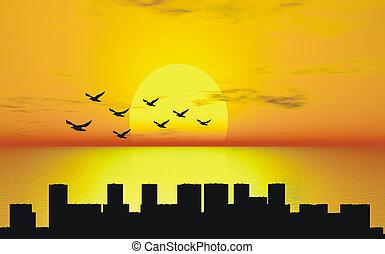 coucher soleil, à, oiseaux