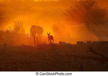 coucher soleil, à, okaukeujo, namibie