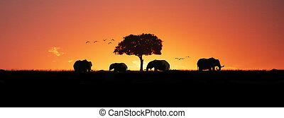 coucher soleil, éléphants, bannière, toile, silhouette, africaine