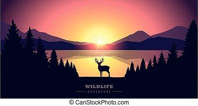 coucher soleil, élan, vie sauvage, aventure, désert, lac
