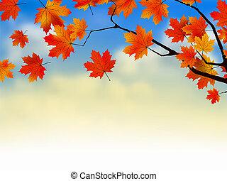 coucher soleil, érable, pousse feuilles