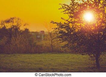 coucher soleil, arbre