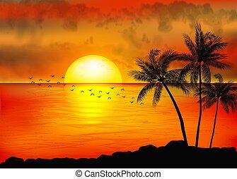 coucher soleil, arbres, exotique, paume