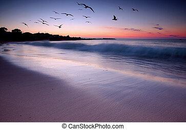 coucher soleil, beauté