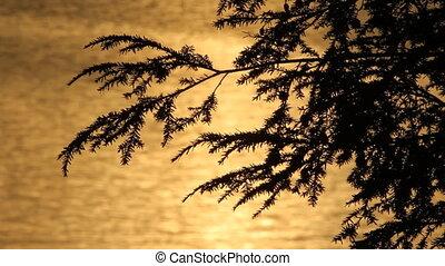 coucher soleil, cèdre, doré, water.