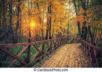 coucher soleil, chemin, automne, parc