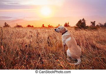 coucher soleil, chien