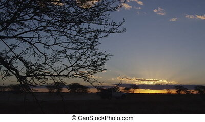 coucher soleil, coup, silhouetted, arbres, fourgon