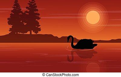 coucher soleil, cygne, silhouette, paysage