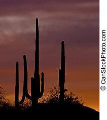 coucher soleil, désert