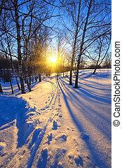 coucher soleil, dans, a, hiver, parc