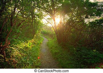 coucher soleil, dans, forêt