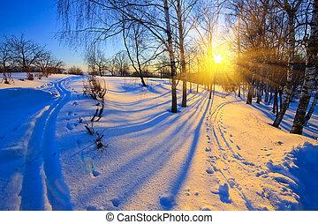 coucher soleil, dans, hiver, parc