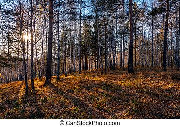 coucher soleil, dans, les, forêt