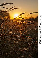 coucher soleil, dans, outback