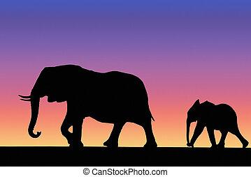 coucher soleil, famille, éléphant