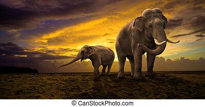 coucher soleil, famille, éléphants