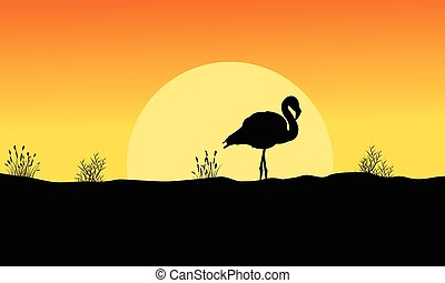 coucher soleil, flamant rose, silhouette, paysage