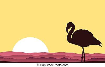 coucher soleil, flamant rose, silhouette, scène