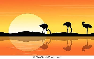 coucher soleil, flamant rose, silhouette, scène, riverbank